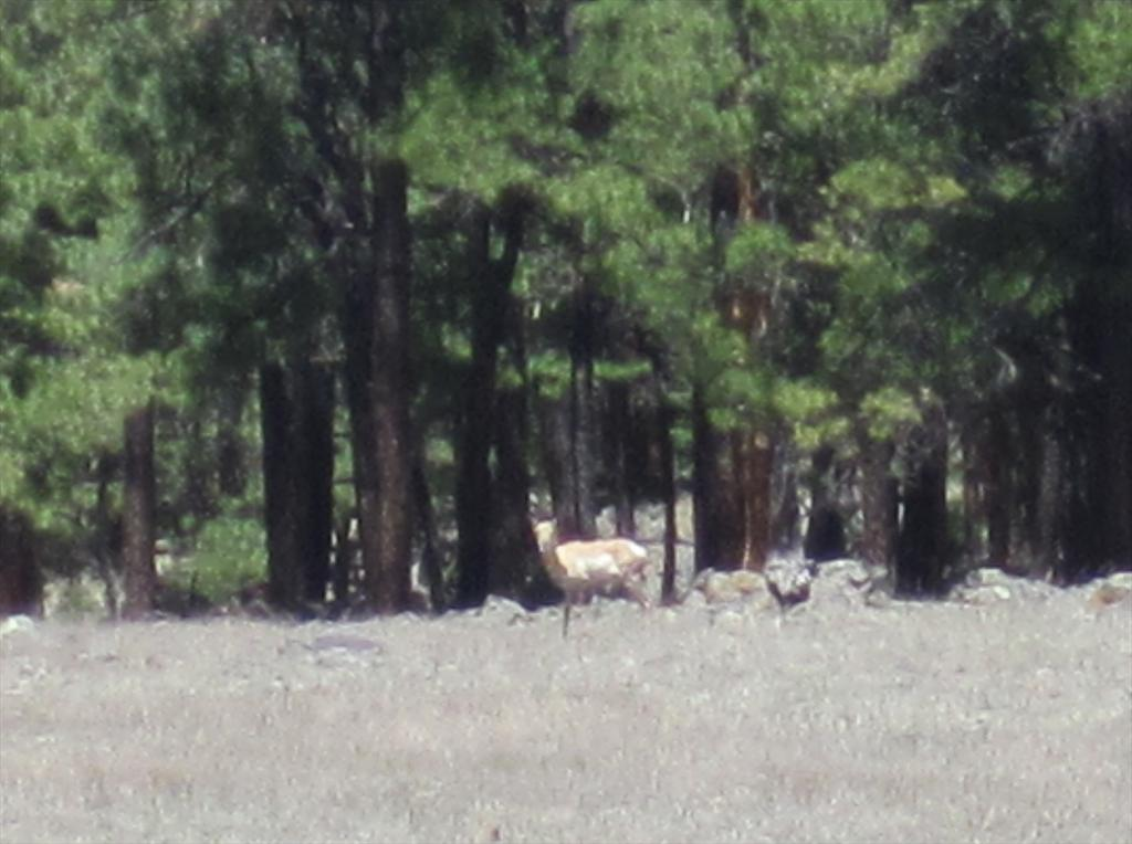 2109-Deer in meadow.jpg