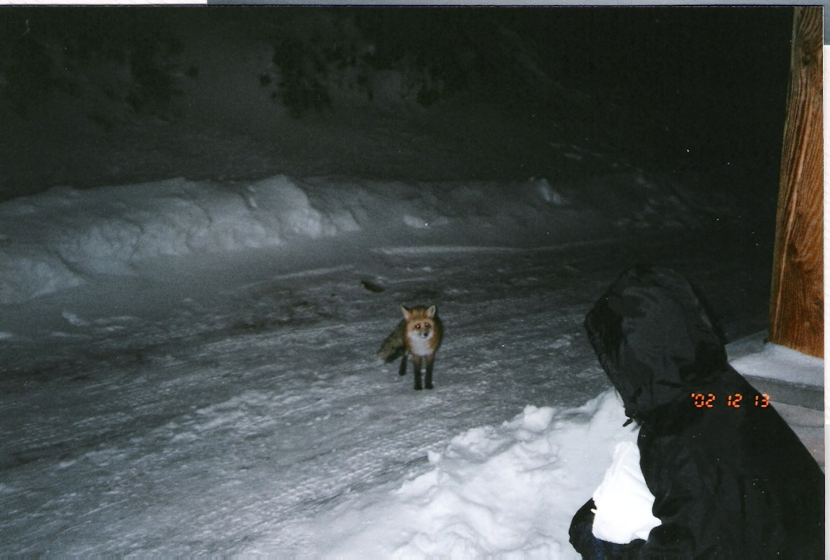 03-Fox in road.jpg